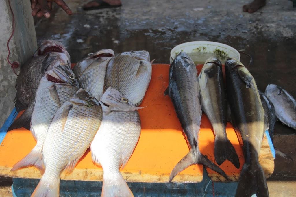poissons sri lanka